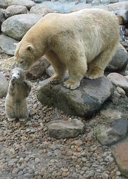 Aalborg Zoo kort x klub com